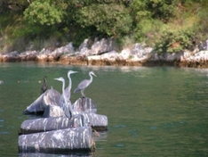 Insel Brac in Kroatien